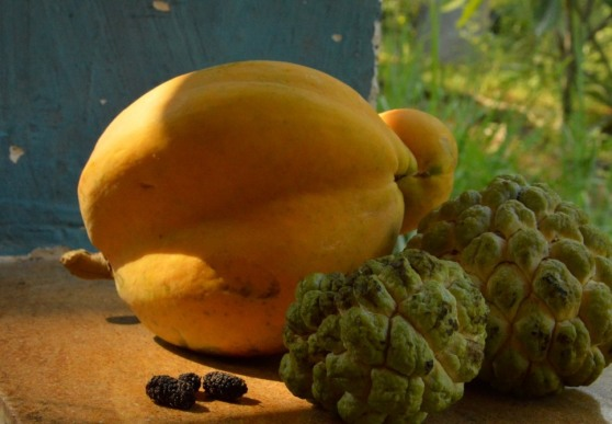 Fall harvests: fruit mania