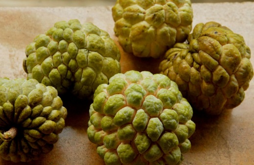 Fall harvests: custard apple
