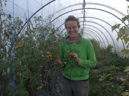 france, natural, farming, tomato, organic, biodynamic, farm, vrindavan, vrindavan farm