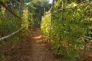 working field, vrindavan, farm, natural