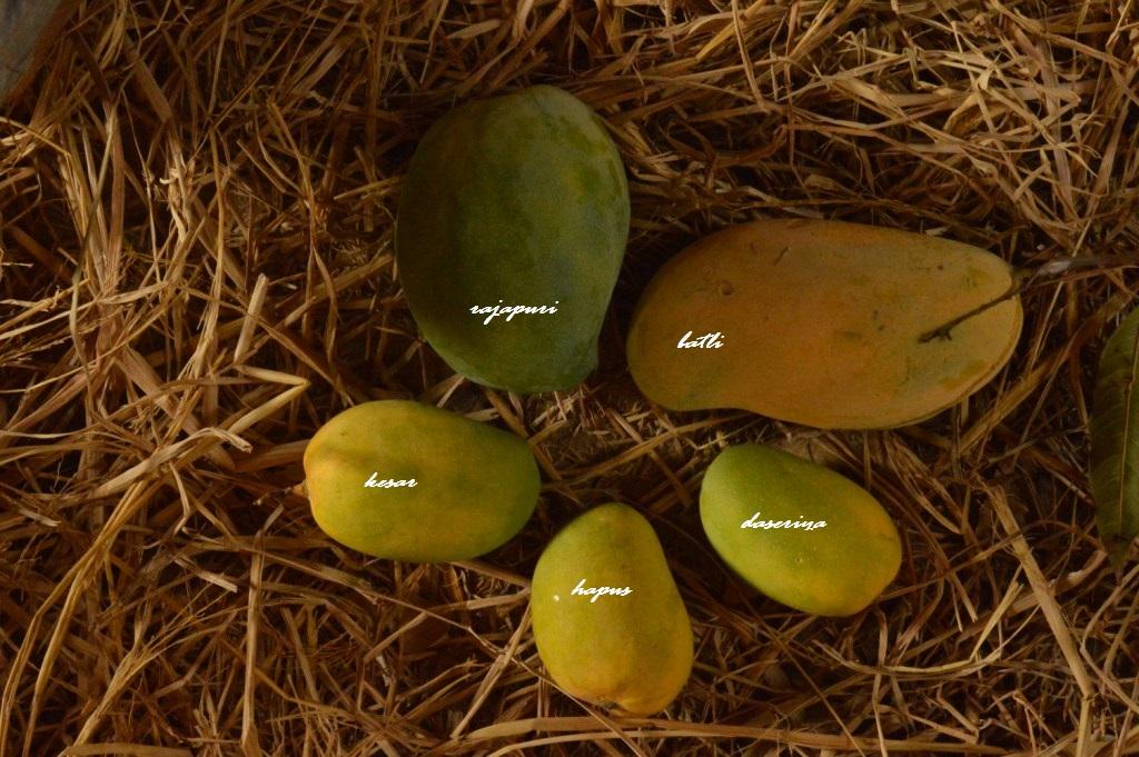 mangoes, organic mango, organic mangoes, naturally ripened, organic alphonso, organic hapus, hapus, alphonso, rajapuri, batli, kesar, dasseriya, totapuri, sindhu