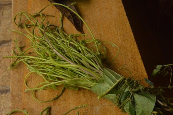 #forestfoods #foodofthegods #indigenous #native #foraging