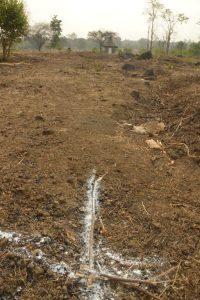 #growingfoodforests #vrindavanfarm #purnamadhuvan