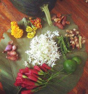 #harvest #biodynamic #vrindavanfarm #farm