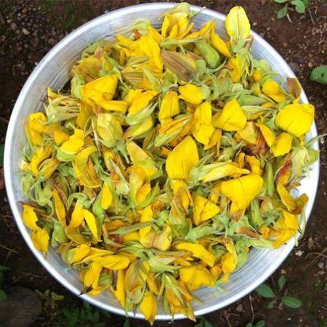 #wildflowers #edibleflowers #wildfoods #biodynamic #vrindavanfarm #farm