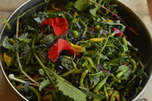vrindavan farm, bio, ferment, edible, organic, produce