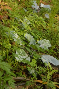 vrindavan farm, bio, organic produce, zen garden