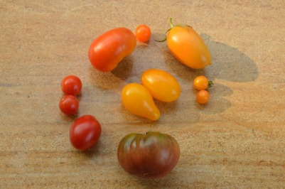heirloom tomatoes for seed