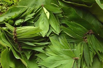 sorrel, ambadi, vitamin c, leaf based, vrindavan, vrindavan farm, organic, produce