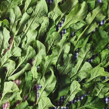 vrindavan farm, vrindavanfarm, aurugula, organic, salads, mumbai